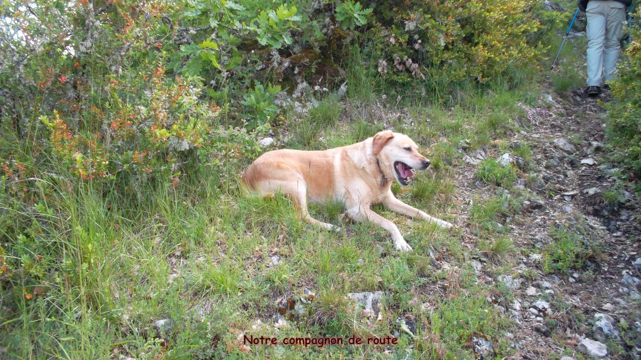 19-P (5) le chien suiveur